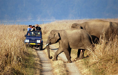 wildlife-tour-agra